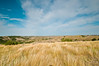 TRND-12013: Prairie grasses at Teddy Roosevelt