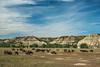 Bison herd at prairie dog town