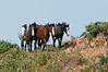 MWH-12048: Wild Horses on the run