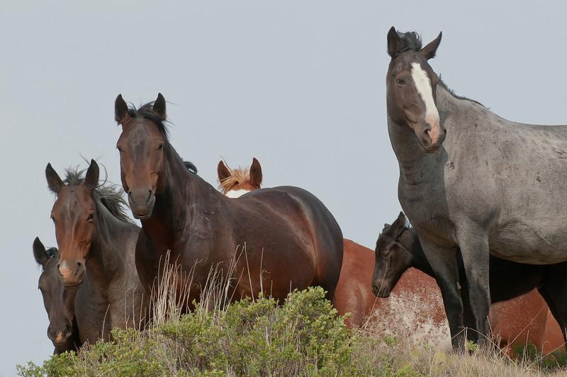 MWH-12040: Wild Horses