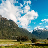 fiordland, south island