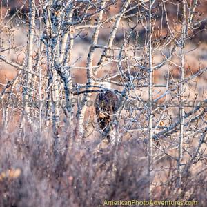 Denali Highway_20140921_104