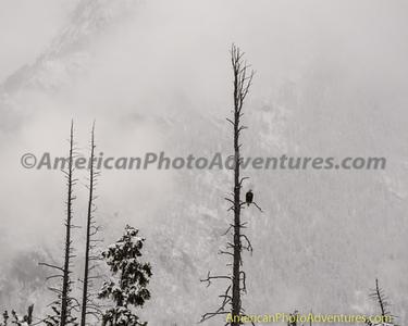 Banff NP_20140910_037