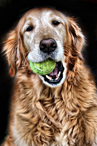 Amber and her Tennis Ball