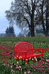 Red Bench & Tulips Wooden Shoe Tulip Festival in Woodburn Oregon.  I used a frac filter to get the effect.