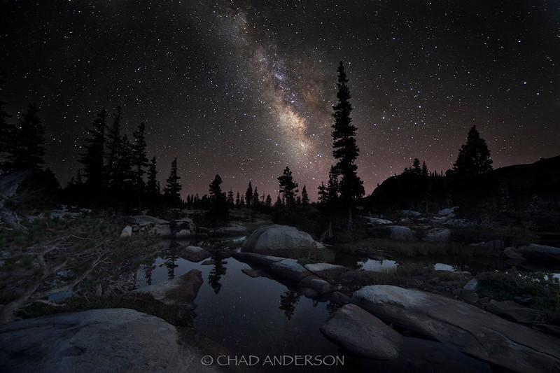 sierra forest at night