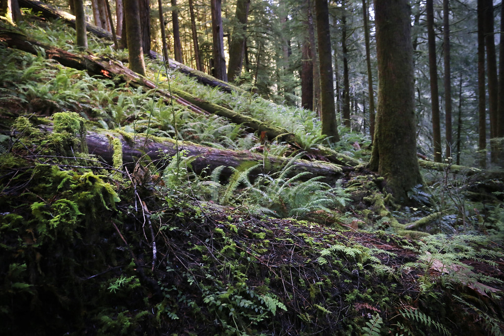 Doerner Fir Trail 2
