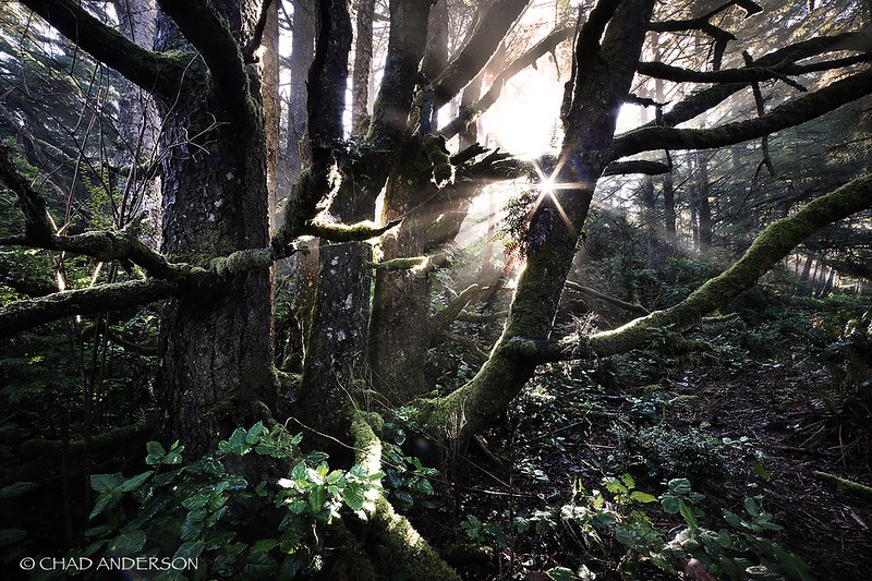 Coastal Rainforest Daybreak