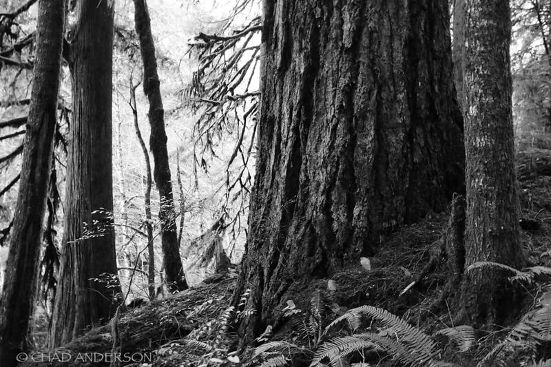 Doerner Fir Trail 1