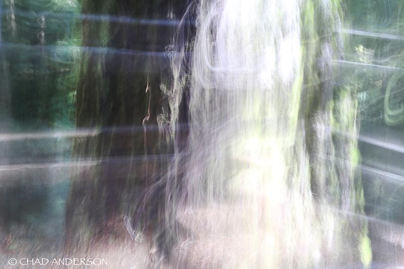 Doerner Fir Trail 5