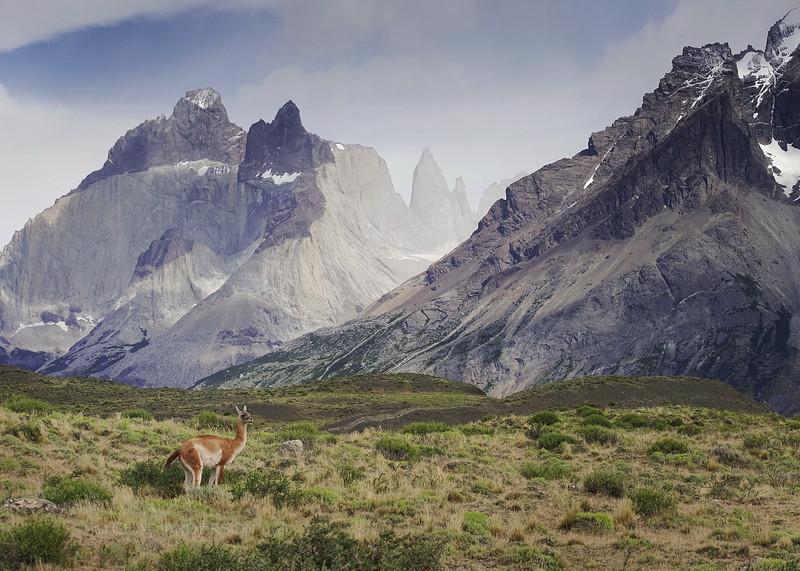 Pura Patagonia