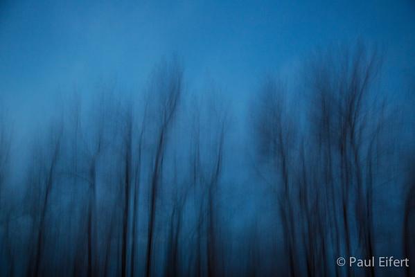 trees in vanishing light