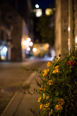 A flower box on the street below the Funiculaire in the hour before daybreak.