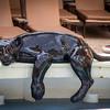 Panther in Solarium