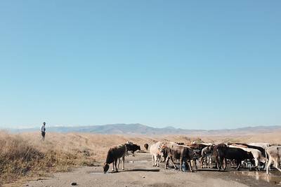 Contested frontlines of the Republic of Artsakh /Azerbaijan border.  www.adler-photo.com