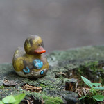 Random duckyy, Byrd Park