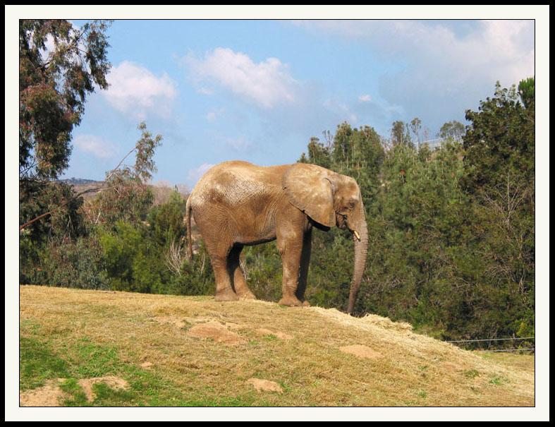 Elephant  Wild Animal Park
