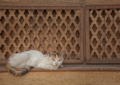 CATS OF BALAD