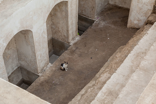 KITTY IN CISTERN, BALAD HISTORICAL DISTRICT