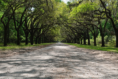 Entrance to the Wormsloe Plantation