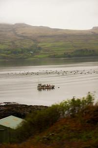 Western Highlands - Isle of Mull