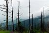 Smokey Mountains -- Summer 2003