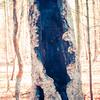 11-23-17: Gatlinburg Trail