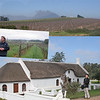 Nelson Wine Estate - Paarl Wineland