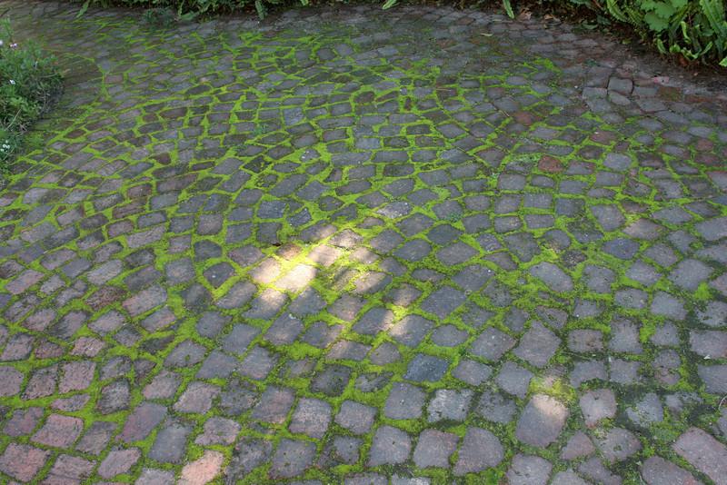 Pathway in Franschhoek