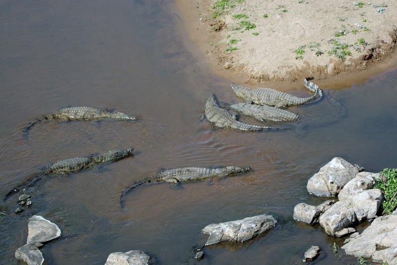 Crocodial River at Kruger National Park
