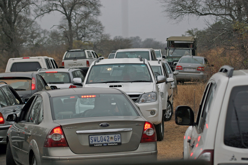 Big Mess - Kruger National Park