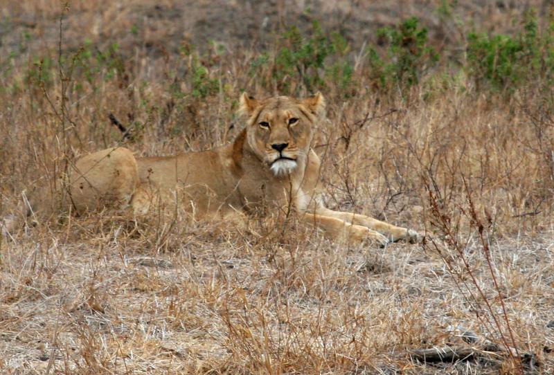 Big 5 - Kruger National Park