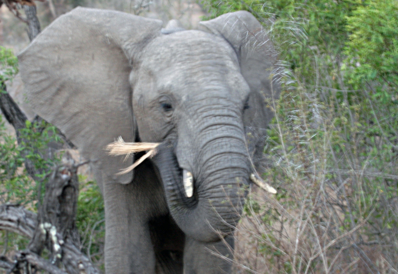 Big 5 - Kwa Madwala Game Reserve