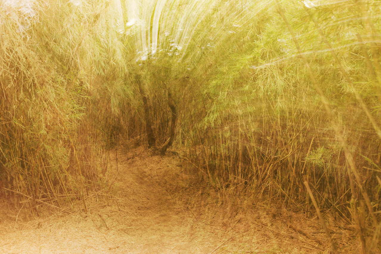 Patagonia 2009 - Trail through a bamboo thicket - stylized
