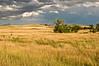 TRSD-8033: Prairie Grasslands of Custer State Park