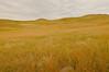 TRSD-8040: Custer State Park Grasslands