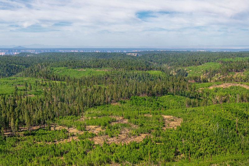Forest recovering from Wild Fire