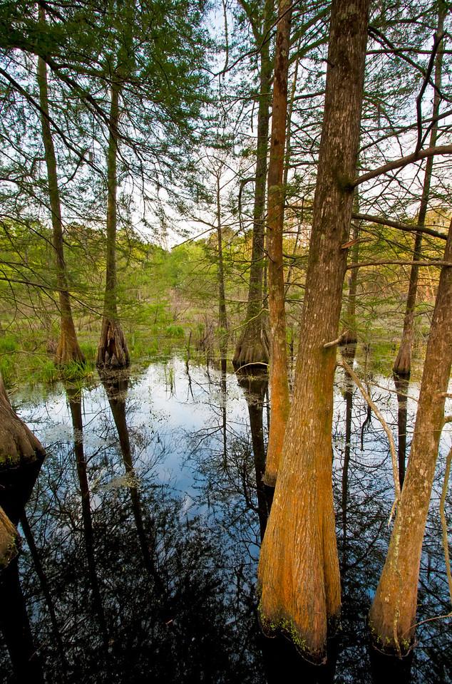 cyress island preserve, lake martin LA