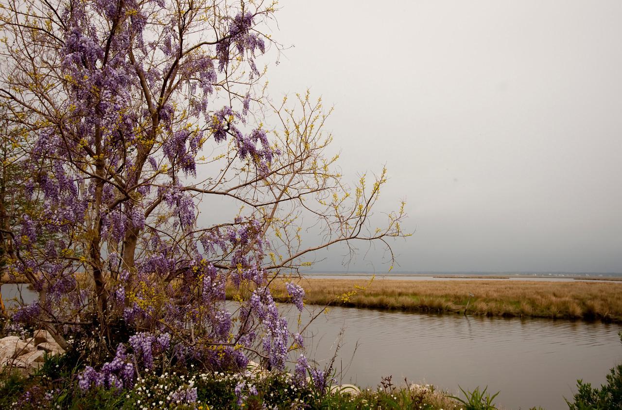 wetlands near lake ponchatrain, slidell LA