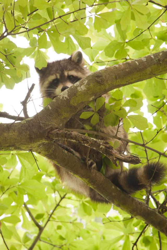 backyard wildlife -- mandeville LA
