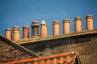 Roof Interest