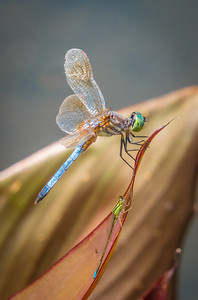 Dragonfly and Damselfly