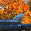 11-6-16: White bird at Swannanoa