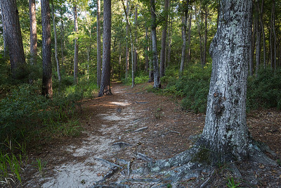 A trail within the park