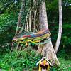spirit worship tree, kaeng krachan national park