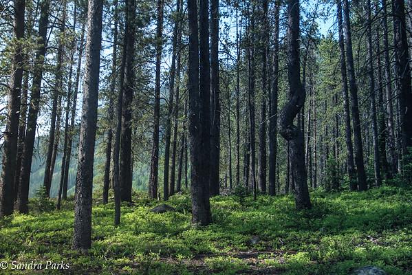 oh be joyful forest