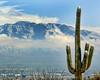 Snow on Saguaro Cactus overlooking Catalina Mountains, Tucson, Arizona