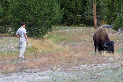 Fransman daagt bison uit... vervolgens valt bison aan. Ik wist niet dat Fransen zo hard konden lopen...