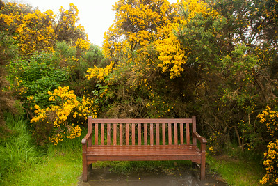 Sit A spell Among the Gorse