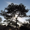 Tree in Silouette at Torrey Pines CA